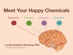 meet-your-happy-chemicals-dopamine-serotonin-endorphin-oxytocin-1-638